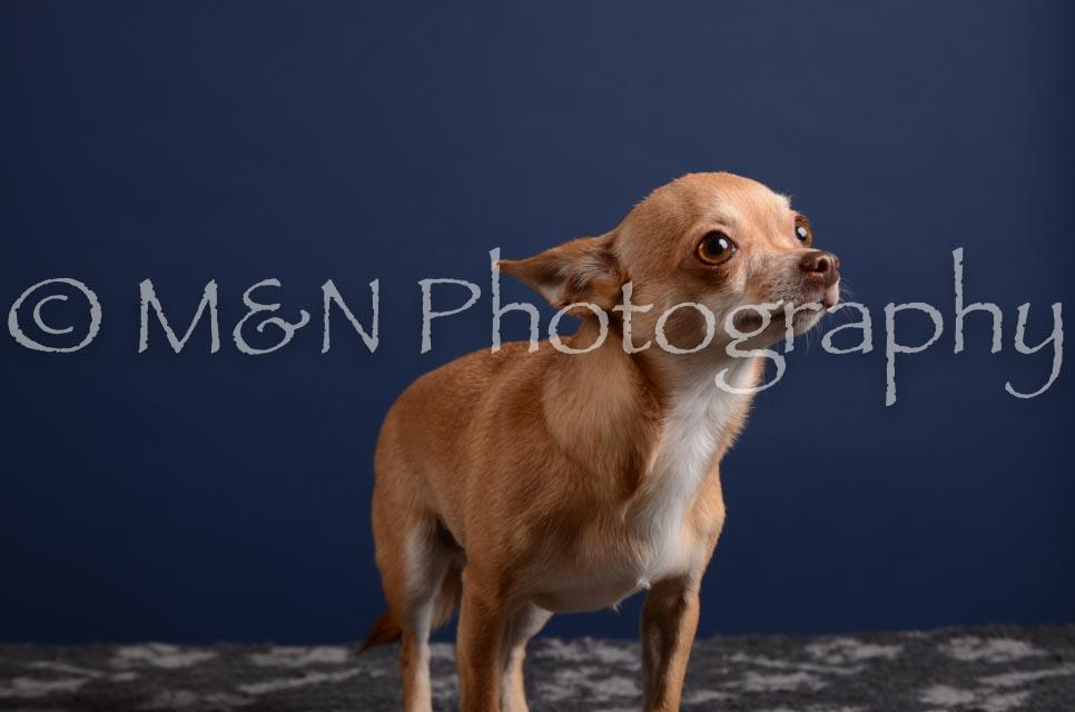 M&N Photography -DSC_4110
