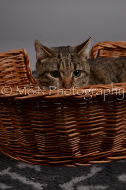 M&N Photography -DSC_2945
