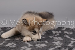M&N Photography -DSC_2614