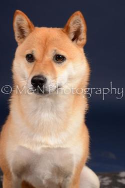 M&N Photography -DSC_0362