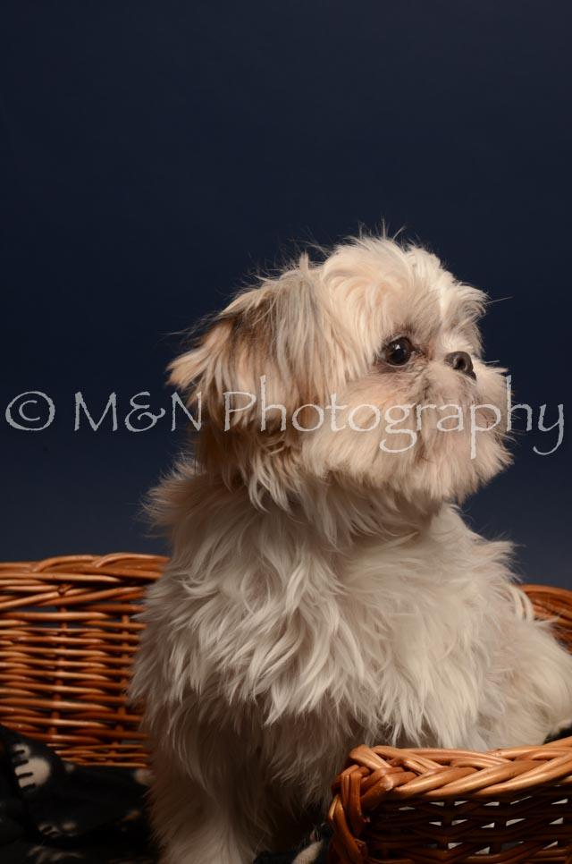 M&N Photography -DSC_4724