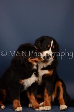 M&N Photography -DSC_3826