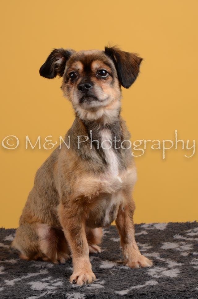 M&N Photography -DSC_4676