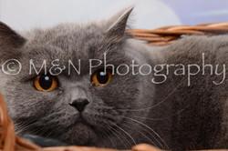 M&N Photography -DSC_6850