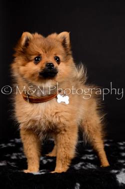 M&N Photography -DSC_5682