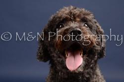 M&N Photography -DSC_0535