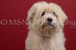 M&N Photography -DSC_3525