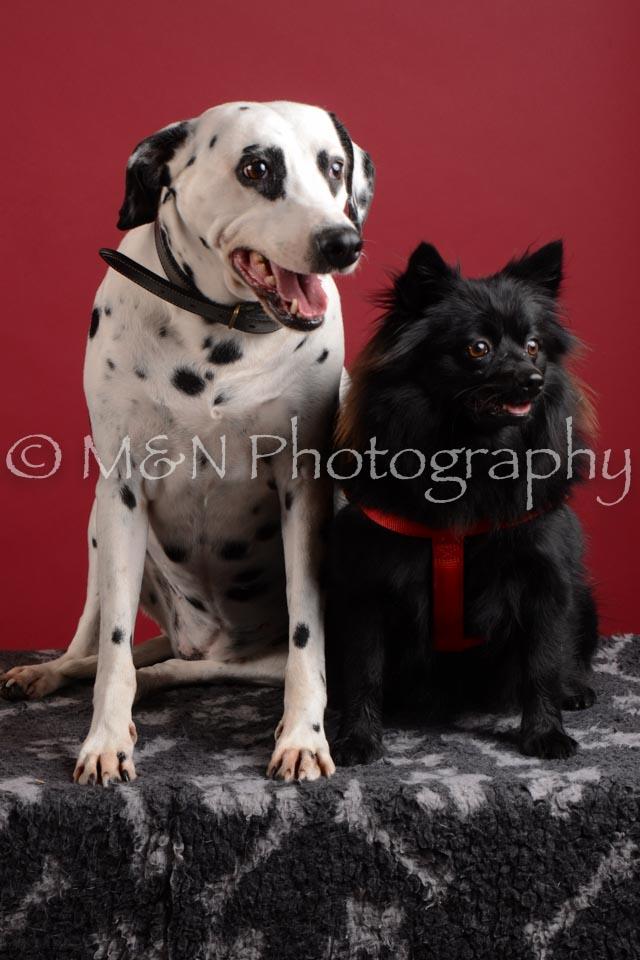 M&N Photography -DSC_3117