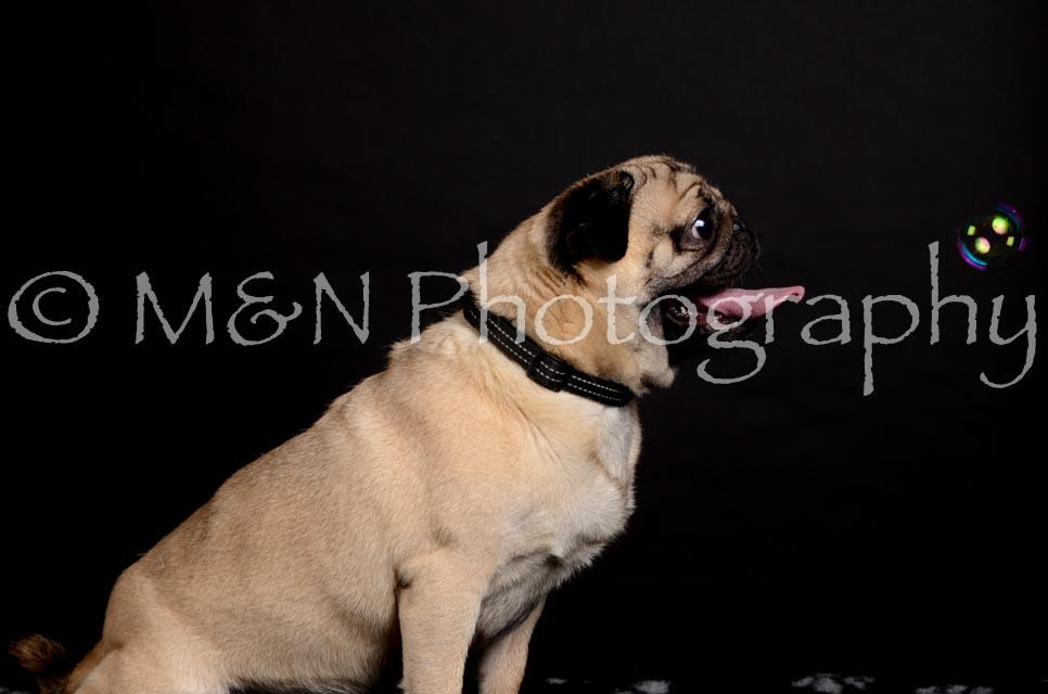 M&N Photography -DSC_5650