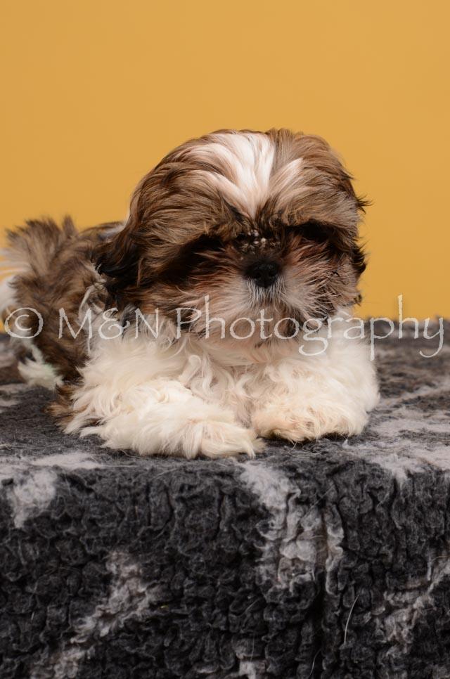M&N Photography -DSC_4555