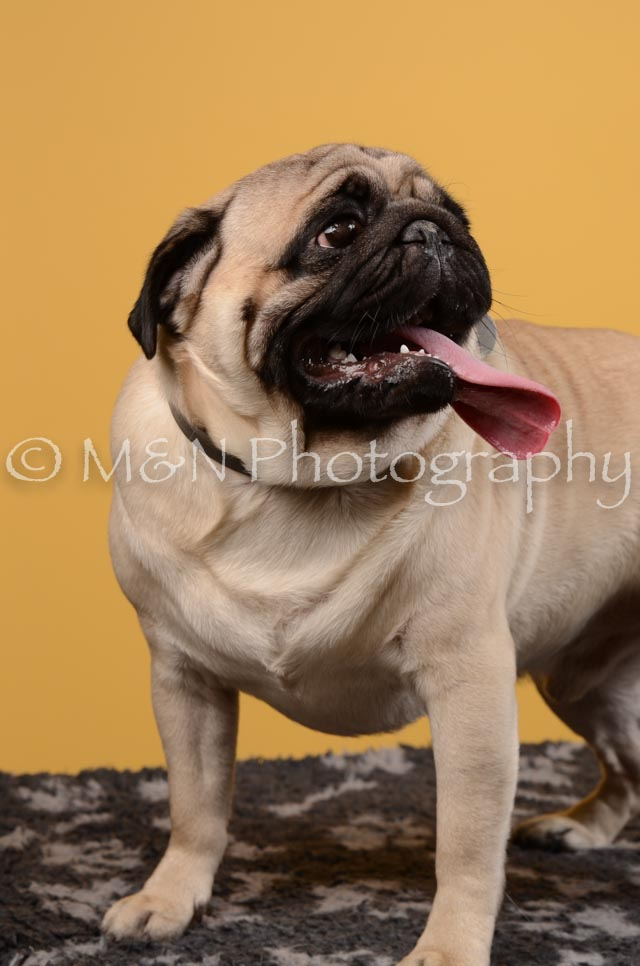 M&N Photography -DSC_4669