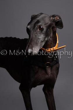 M&N Photography -DSC_2933