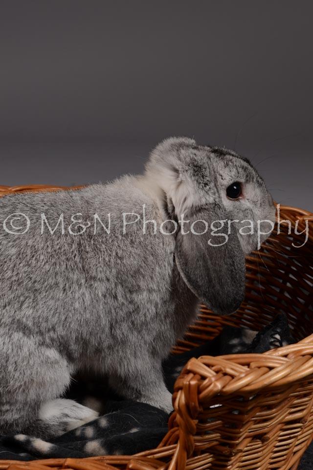 M&N Photography -DSC_2282