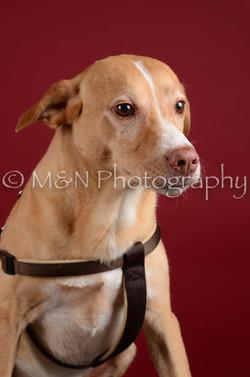M&N Photography -DSC_3291