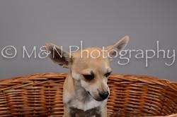 M&N Photography -DSC_1875