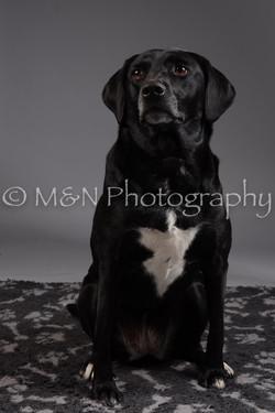 M&N Photography -DSC_2035