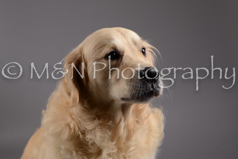 M&N Photography -DSC_1569
