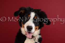 M&N Photography -DSC_3750