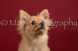 M&N Photography -DSC_3237