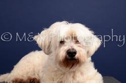 M&N Photography -IMG_4712