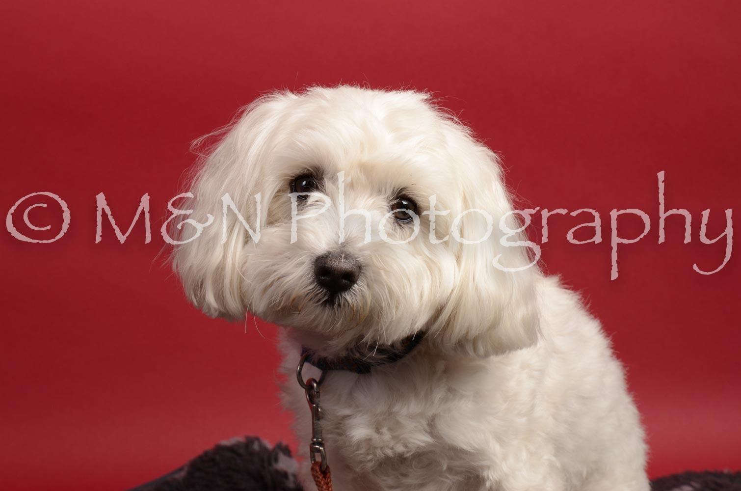 M&N Photography -DSC_8645