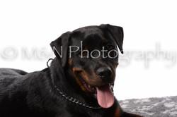 M&N Photography -DSC_8913
