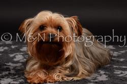 M&N Photography -DSC_9702