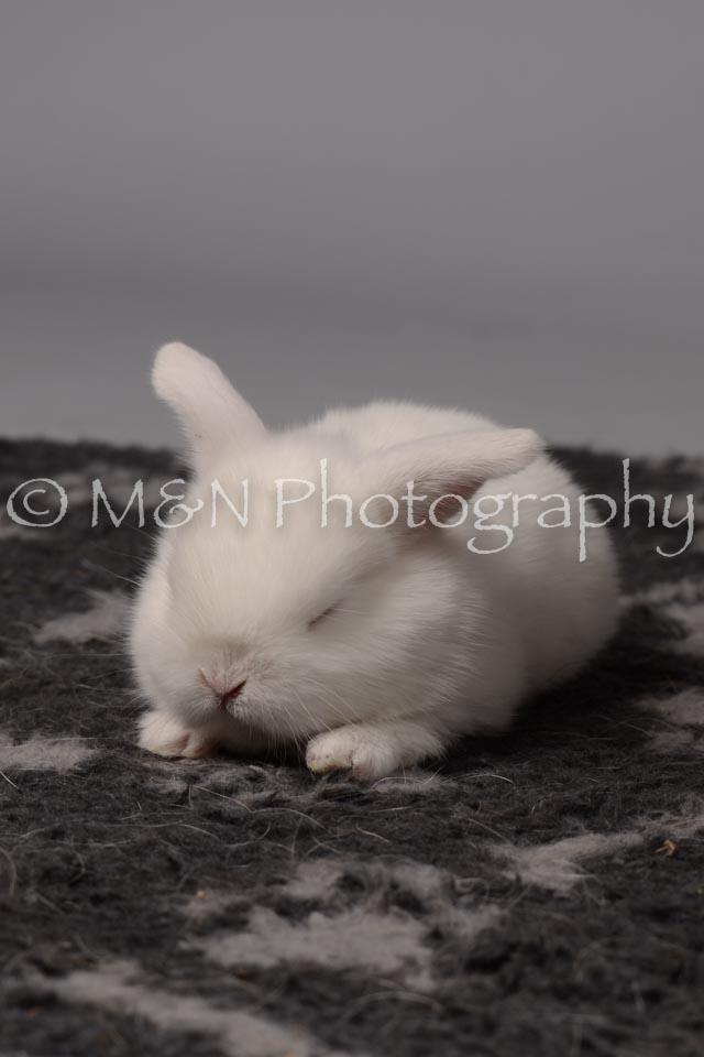 M&N Photography -DSC_1689