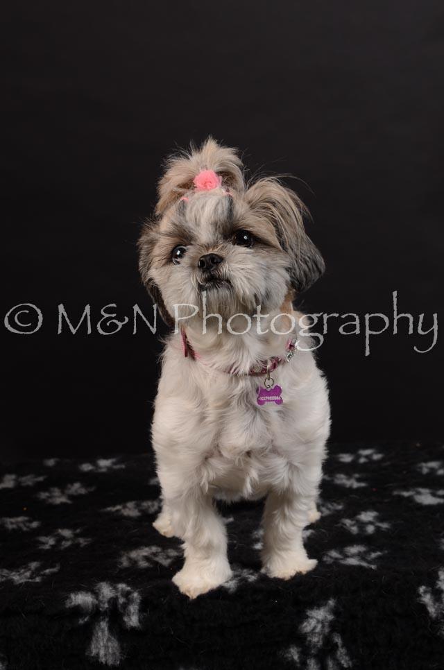 M&N Photography -DSC_5993