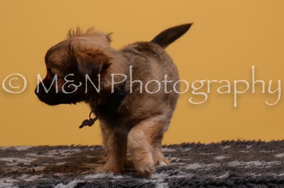 M&N Photography -DSC_4726