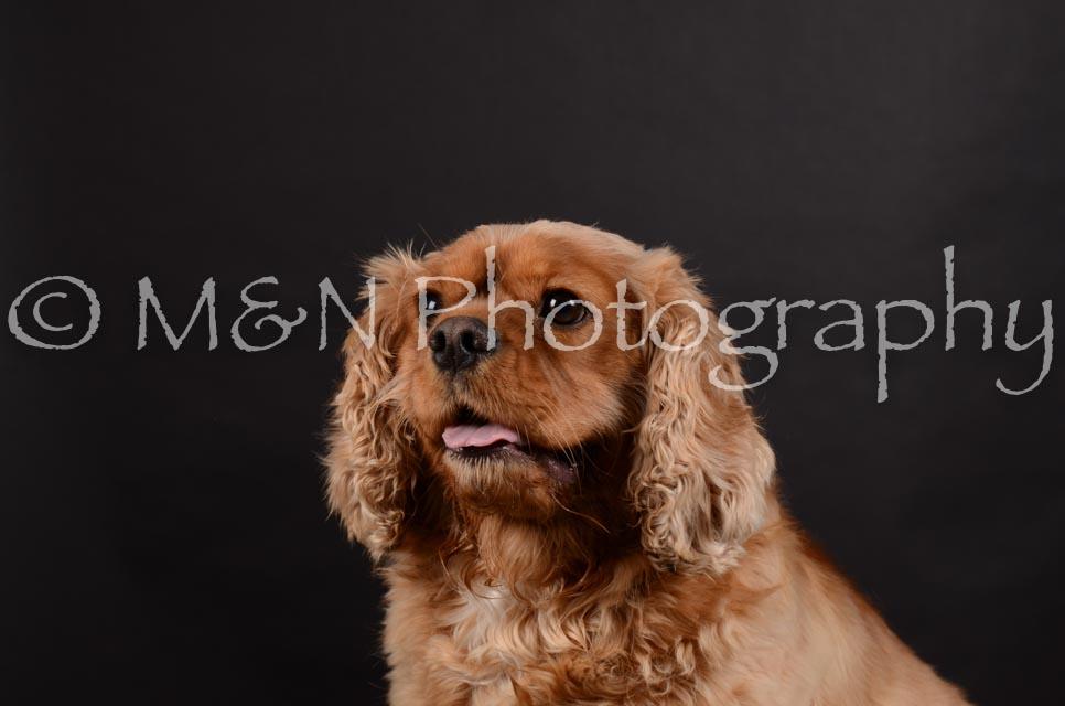 M&N Photography -DSC_5956