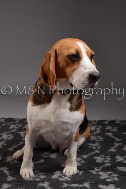 M&N Photography -DSC_2360
