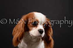 M&N Photography -DSC_5426