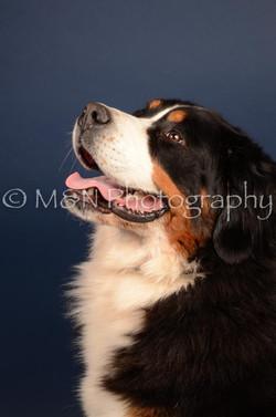 M&N Photography -DSC_3802