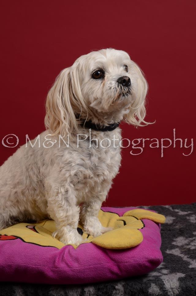 M&N Photography -DSC_3586