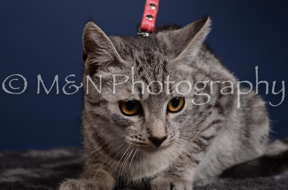 M&N Photography -DSC_4270