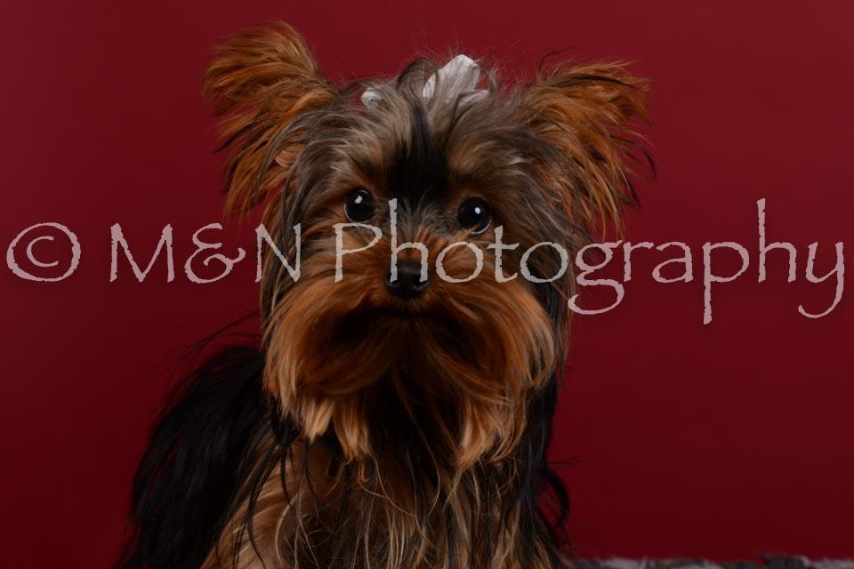 M&N Photography -DSC_3333