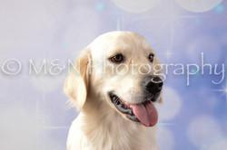 M&N Photography -DSC_6655