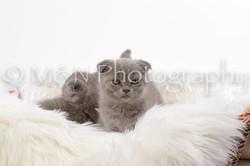 M&N Photography -DSC_8824