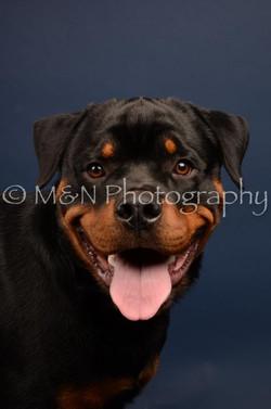 M&N Photography -DSC_3751