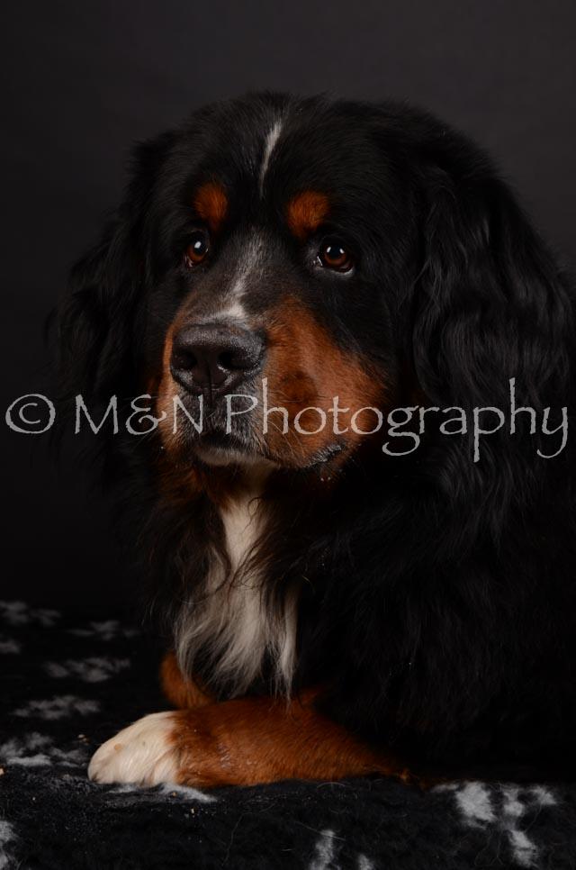 M&N Photography -DSC_5715