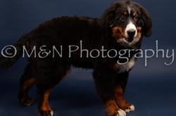 M&N Photography -DSC_3769
