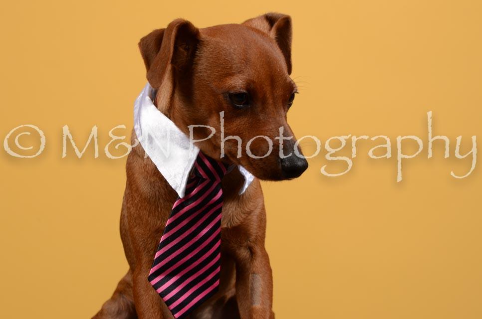 M&N Photography -DSC_4636