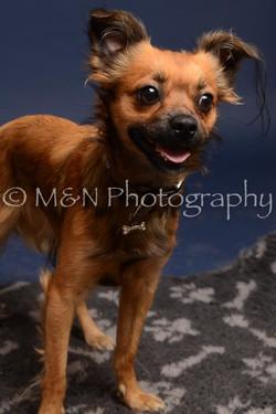 M&N Photography -DSC_0481