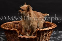M&N Photography -DSC_2535