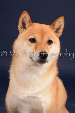 M&N Photography -DSC_0369