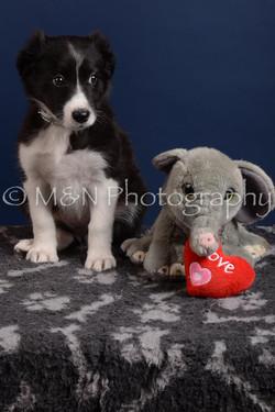 M&N Photography -DSC_3980