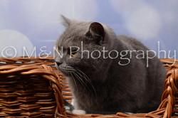 M&N Photography -DSC_6975