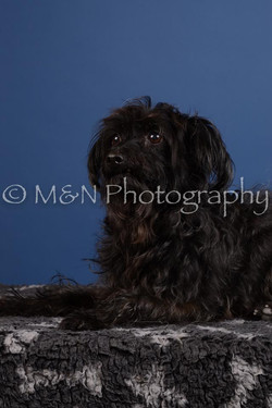M&N Photography -DSC_4999