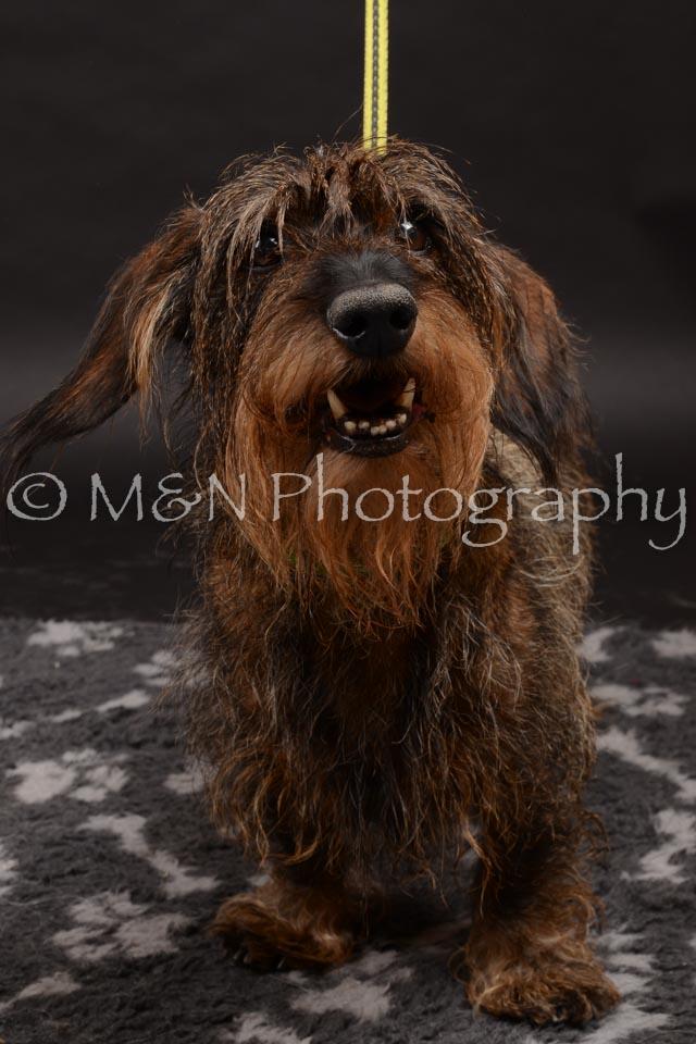 M&N Photography -DSC_0005